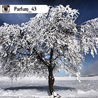 parfum_43