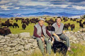 Marcel et pascal Crespy, éleveurs de moutons noirs du Velay au Monastier sur Gazeille