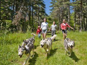 Balade cani-randonnée en famille à Sainte-Sigolène, Loisirs de pleine nature, Pays de la Jeune Loire, Haute-Loire, Auvergne