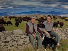 L'agneau noir du Velay