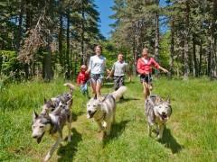 Cani-rando et autres cani-activités