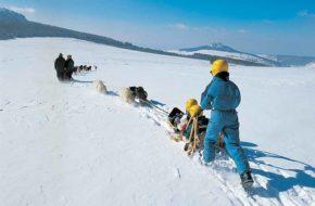 Balade en chiens de traineau aux Estables, Le Mézenc, Loisirs de pleine nature, Pays du Velay, Haute-Loire, Auvergne