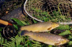 Pêche en Haute-Loire