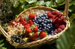 Fruits rouges des monts du Velay, le Bon et le Bien-manger, Gastronomie, Pays de la Jeun Loire, Haute-Loire, Auvergne