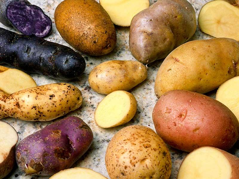 Les pommes de terre de Craponne-sur-Arzon, Produit Emblématique du Terroir, Haute-Loire, Auvergne