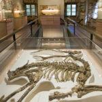 Musée de la paléontologie - Chilhac