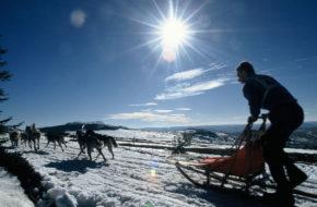 Bouger, sports d'hiver, Chiens de traîneaux aux Estables, Mézenc, Haute-Loire, Auvergne