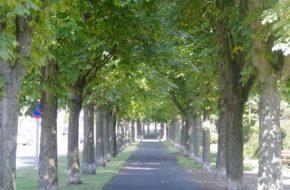Brives-Charensac - 2 fleurs, villes et villages fleuris, Haute-Loire, Auvergne