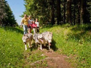 Cani-rando à Roche en Régnier