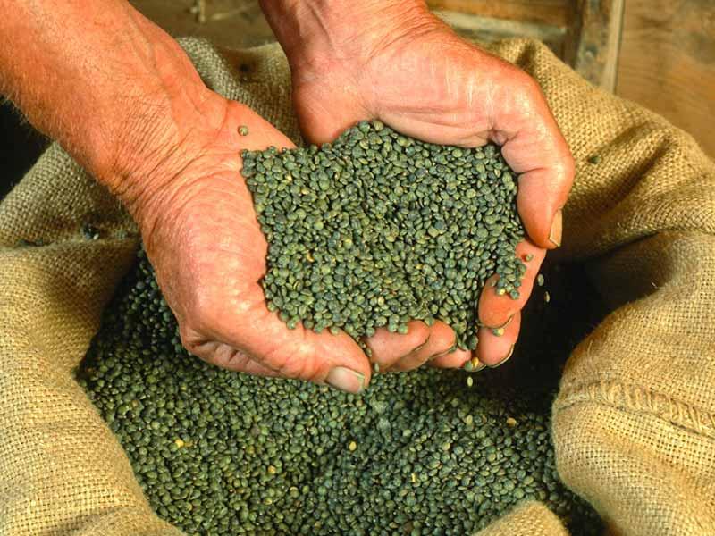 Lentille verte du Puy-en-Velay, produit du terroir, Haute-Loire, Auvergne
