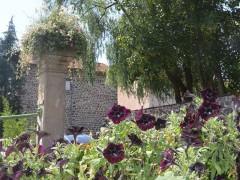 Blanzac – 1 Fleur