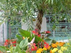 Saint-Pal-de-Mons – 1 Fleur