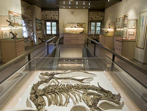 Musée de la Paléontologie Christian Guth - Fouilles du Mastodonte d'Auvergne le Mammouth