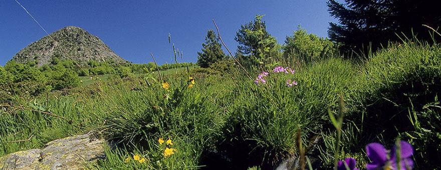 la source de la Loire sauvage, le Mont Gerbier-de-Jonc