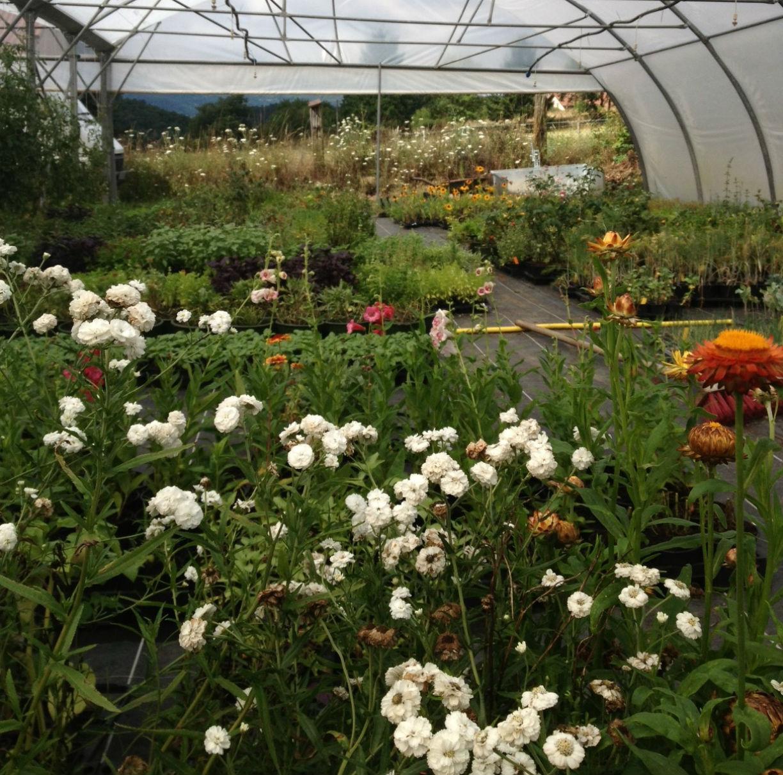 pdt_plantes_aromatiques_potageresbio_beauzac_andre_bissardon