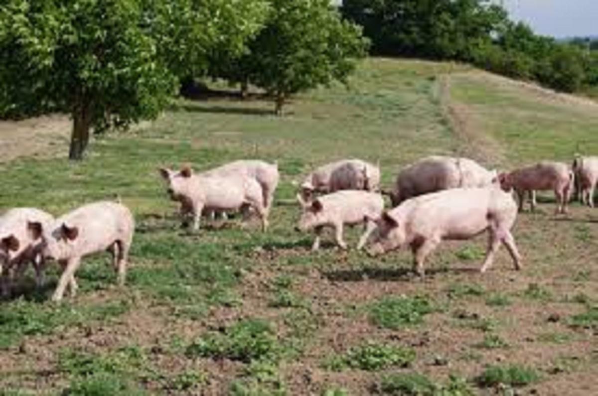 produits fermiers de Boisset