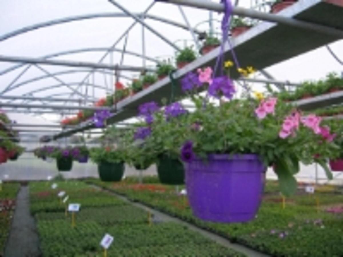 horticulture De Dios