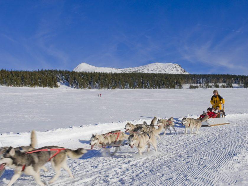 SEJ_Sensations Grand Nord_ chiens de traineaux