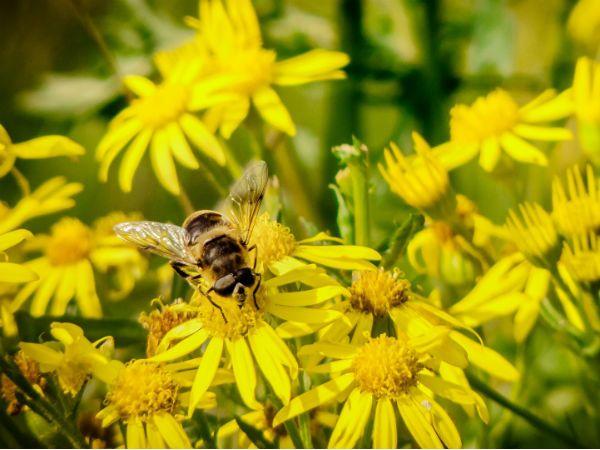 miel-visite