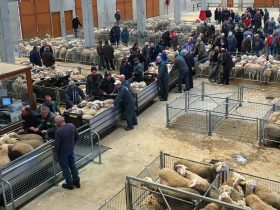 Marché Bestiaux Saugues