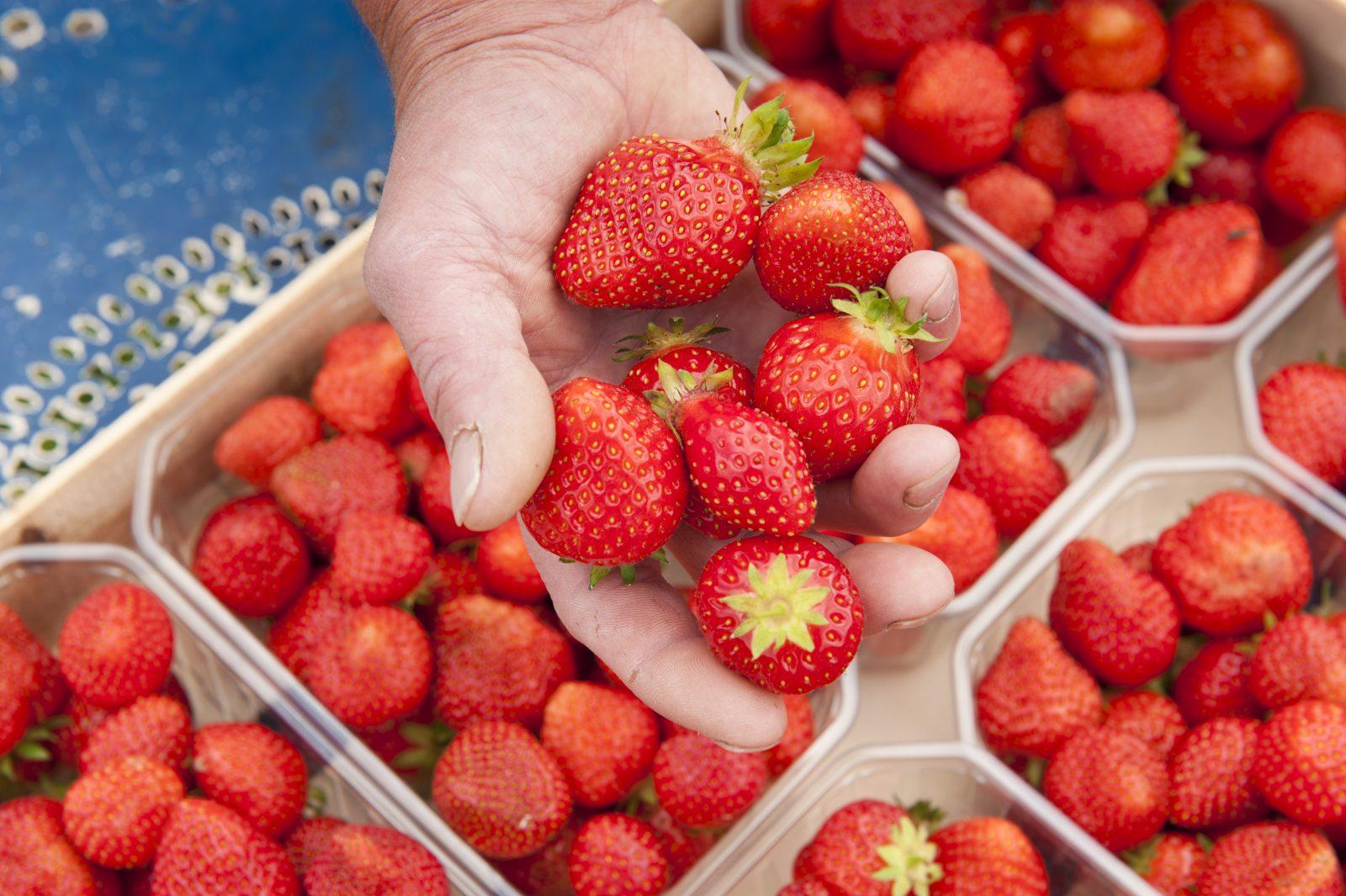 Douceurs de Fruits rouges