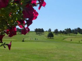 Golf de la plaine