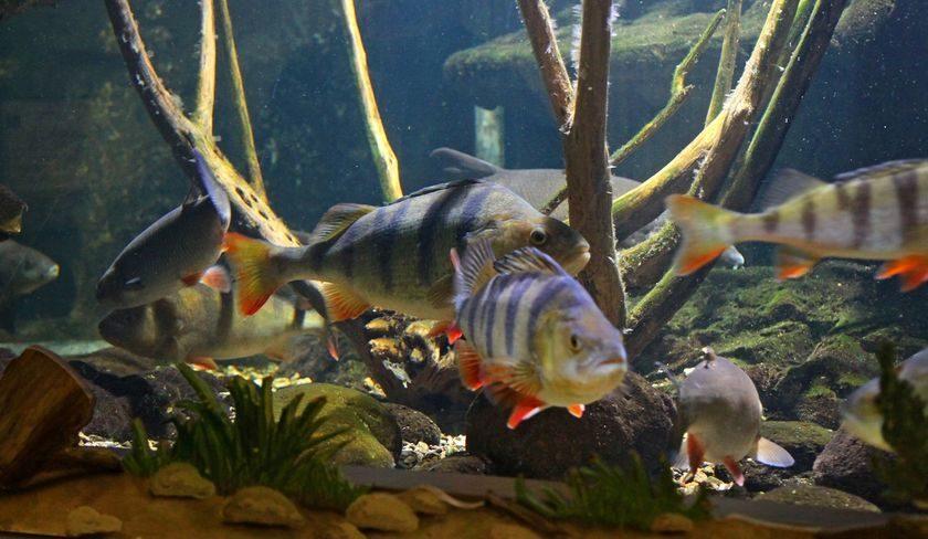 aquarium maison du saumon et de la rivi re auvergne vacances. Black Bedroom Furniture Sets. Home Design Ideas
