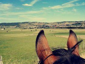 Tourisme_Equestre_Saugues