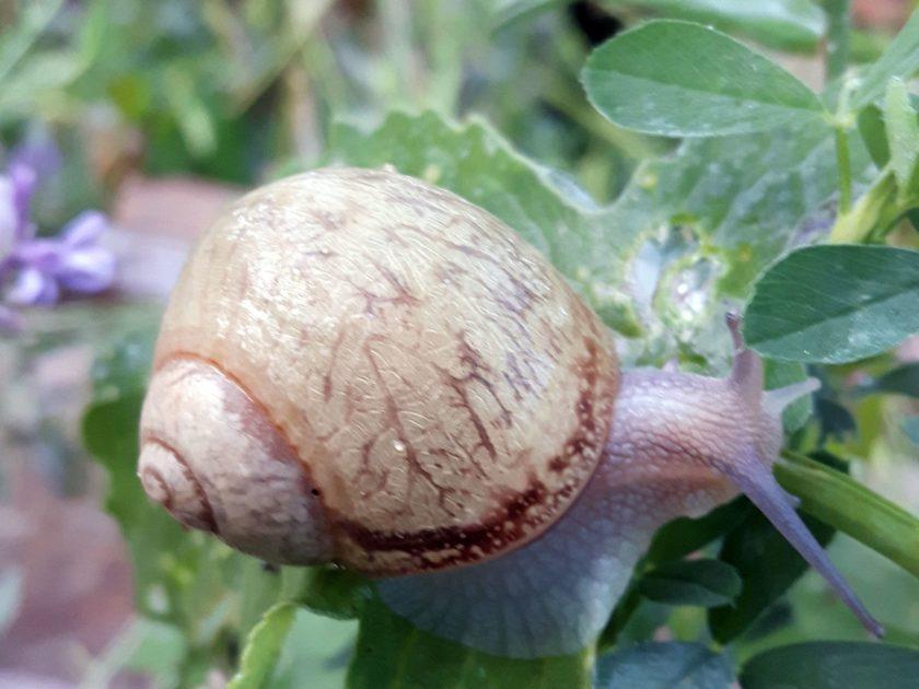 L'Escargot d'Yssi