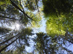 Forêt Pourcheresse