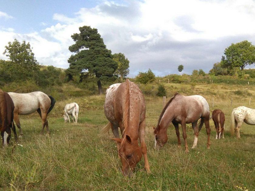 Macquart POA Ranch