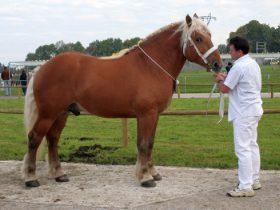 Concours de chevaux