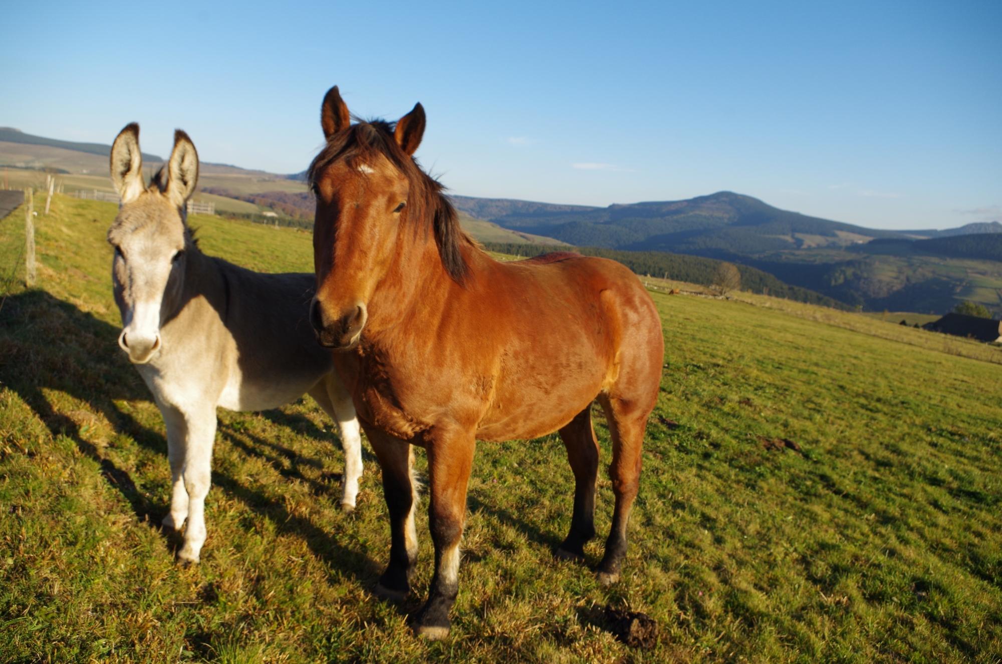 Cheval et âne