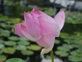 COM_Bien-être_Fleur