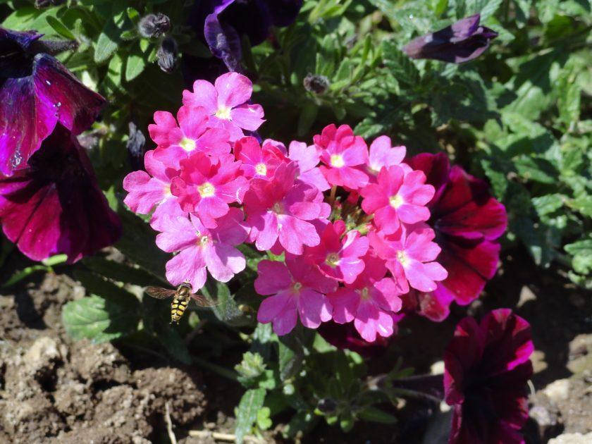 ectérieur fleuri
