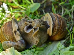 Escargots du Lignon