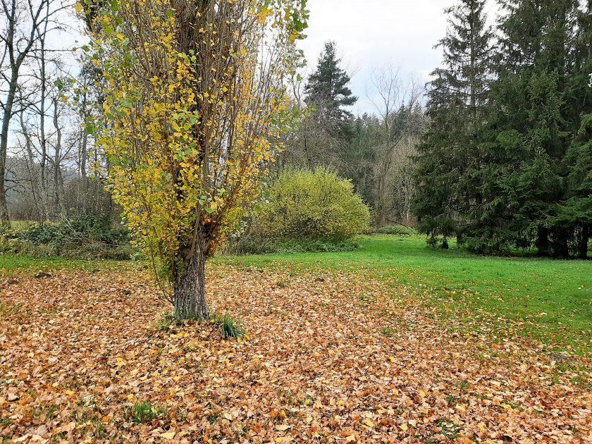 Logement C4 – Les Gîtes de Bois de Chelles