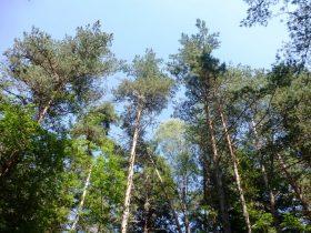 EQUI_PR 613 – Les Pierres des Moines_diversité arbres