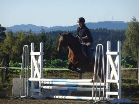 EVE_Concours de Sauts d'Obstacles et Hunter_La Cavalerie du Lac