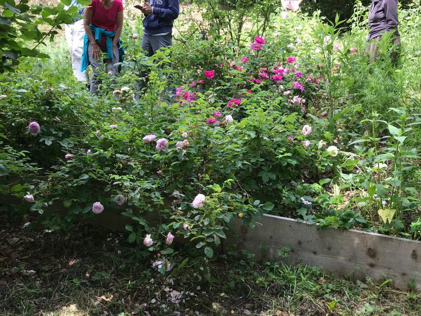 ACT_Découverte de jardins en agroforesterie_GebNout_découverte des jardins