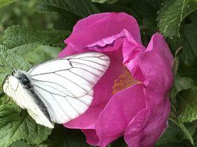 PCU_Geb Nout Diffusion_Fleur